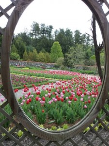 Outdoor picture frame for the lovely tulips at the Biltmore gardens in Asheville NC